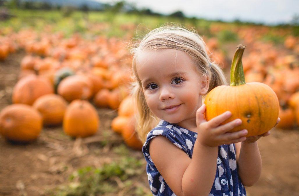Pumpkin Patches around Elk Grove